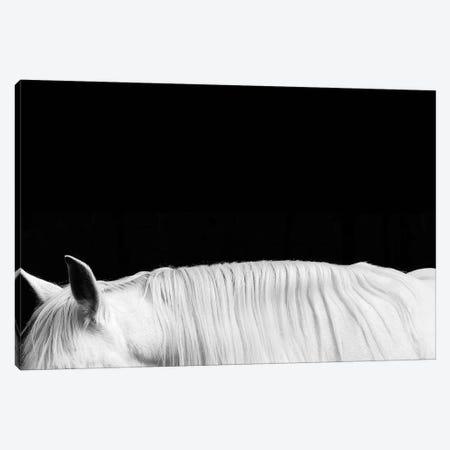 White On Black II 3-Piece Canvas #SCA14} by Samantha Carter Canvas Artwork