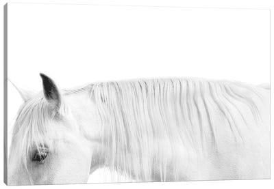 White On White Canvas Art Print