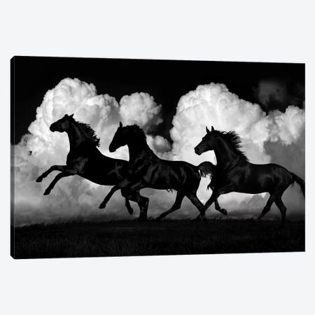 Wild Horses Canvas Print #SCA16} by Samantha Carter Canvas Art