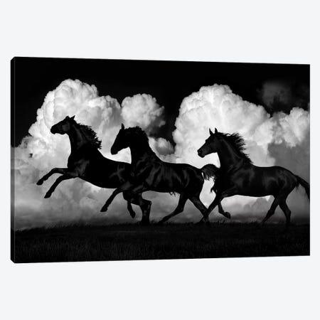 Wild Horses Canvas Print #SCA16} by Samantha Carter Canvas Art