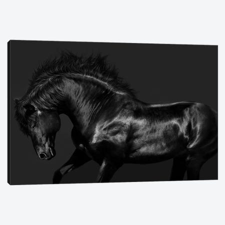 Black On Black Canvas Print #SCA1} by Samantha Carter Canvas Artwork