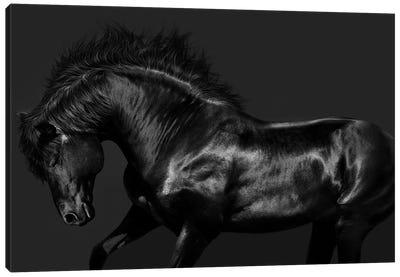 Black On Black Canvas Art Print