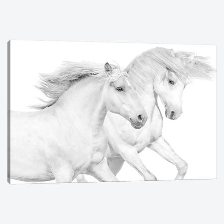 Duo II Canvas Print #SCA6} by Samantha Carter Art Print