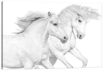 Duo II Canvas Art Print
