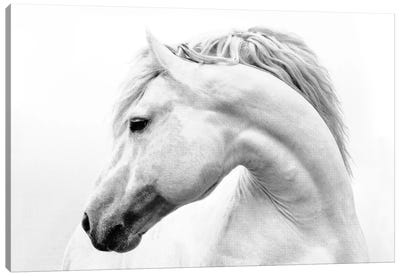 Horses Art Prints Icanvas
