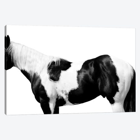 Pinto Canvas Print #SCA9} by Samantha Carter Canvas Wall Art