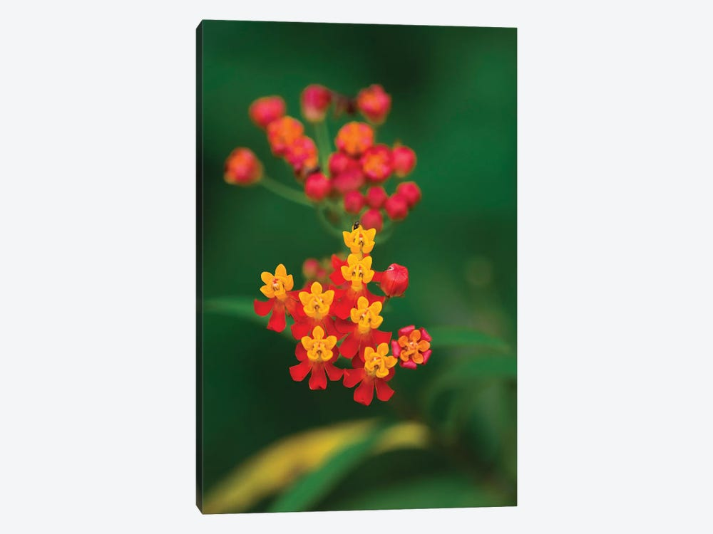 Flowers From Guatemala by Scott Bennion 1-piece Canvas Print