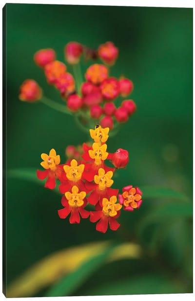Flowers From Guatemala Canvas Art Print
