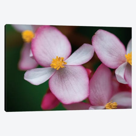 Flowers From Peru Canvas Print #SCB23} by Scott Bennion Canvas Art Print