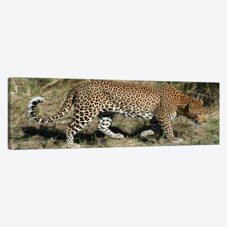 Leopard Hunting Canvas Print #SCB32} by Scott Bennion Canvas Art