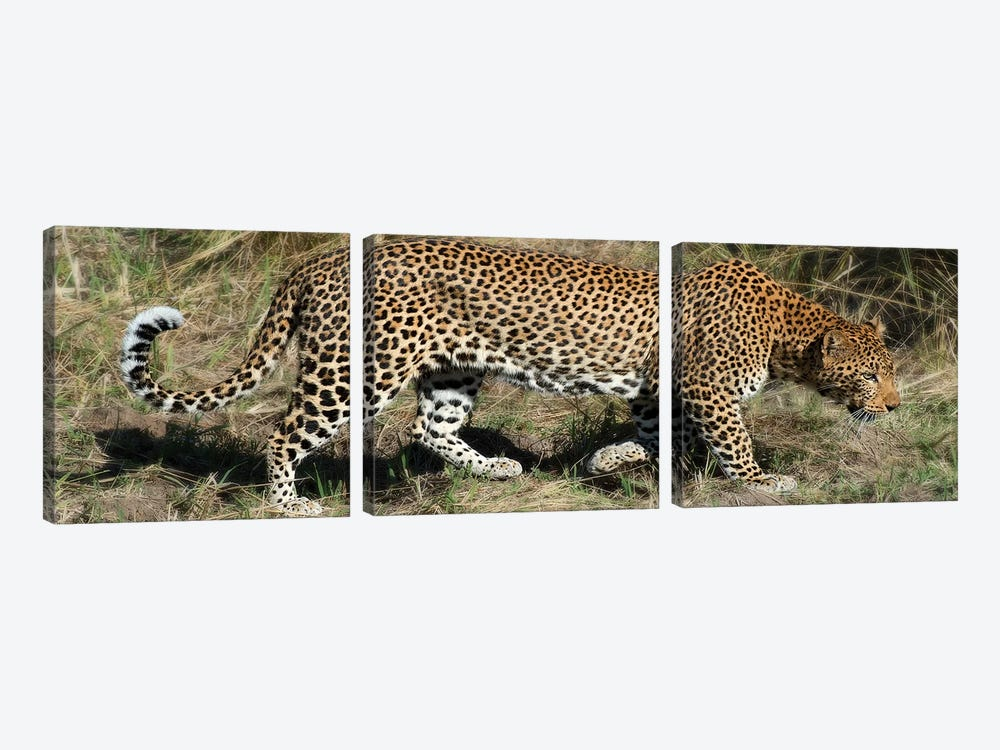 Leopard Hunting 3-piece Canvas Art