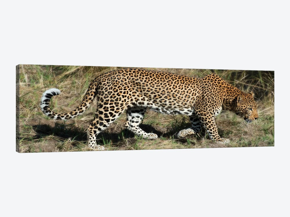 Leopard Hunting 1-piece Canvas Art