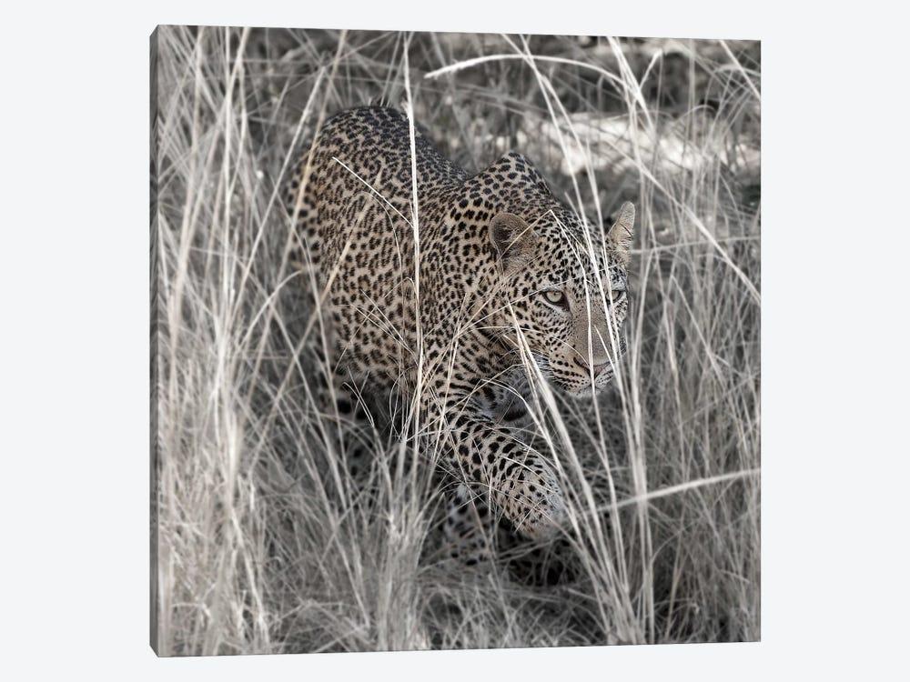 Leopard In The Grass by Scott Bennion 1-piece Canvas Art