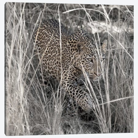 Leopard In The Grass Canvas Print #SCB34} by Scott Bennion Canvas Art Print
