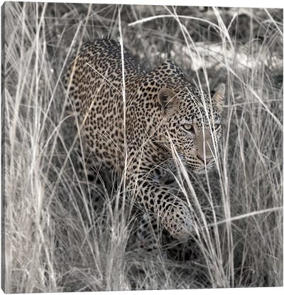 Leopard In The Grass Canvas Art Print