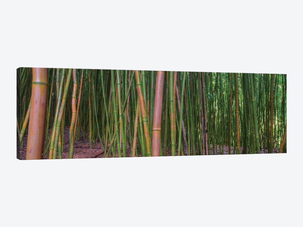 Bamboo by Scott Bennion 1-piece Canvas Art