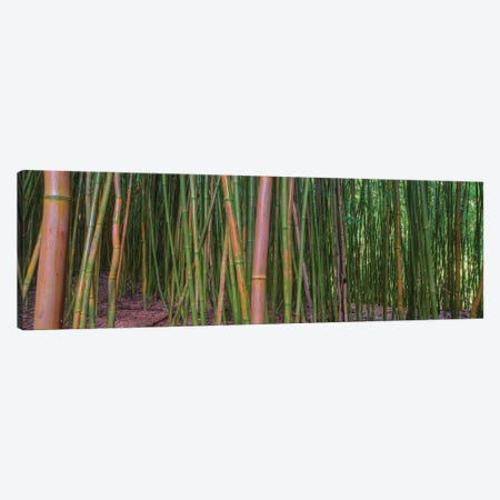 Bamboo Canvas Print #SCB3} by Scott Bennion Art Print