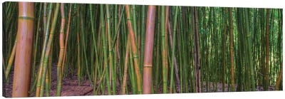 Bamboo Canvas Art Print