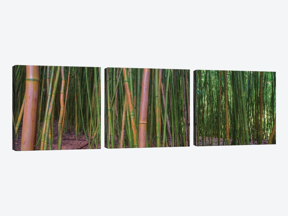 Bamboo by Scott Bennion 3-piece Canvas Art