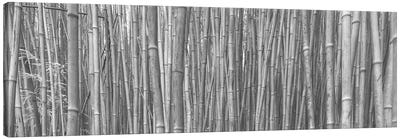 Bamboo Forest Canvas Print #SCB4