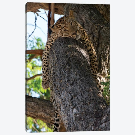 Sleeping Canvas Print #SCB53} by Scott Bennion Canvas Art