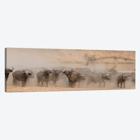 Spooked Buffalo Canvas Print #SCB58} by Scott Bennion Canvas Artwork