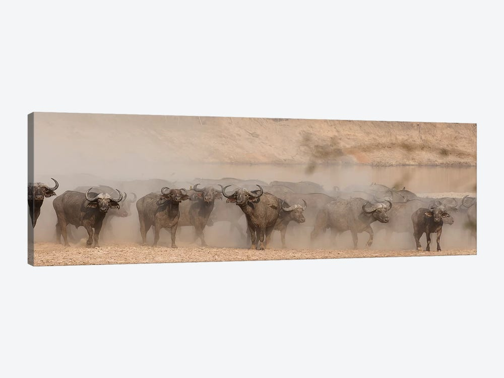 Spooked Buffalo by Scott Bennion 1-piece Canvas Wall Art