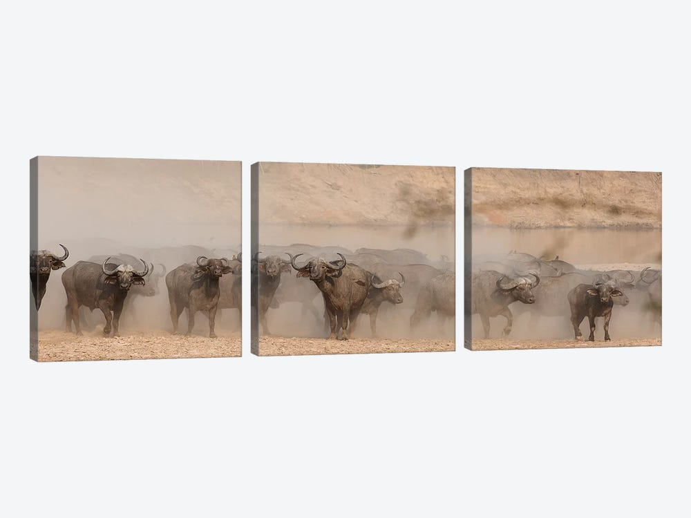 Spooked Buffalo by Scott Bennion 3-piece Canvas Art