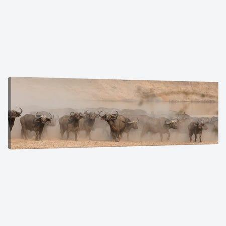 Spooked Buffalo Canvas Print #SCB58} by Scott Bennion Canvas Artwork