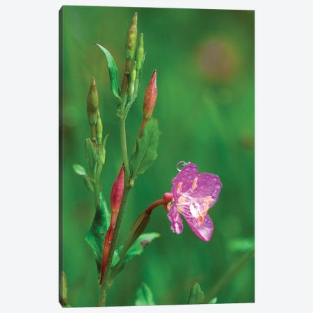 Spring Flower Canvas Print #SCB59} by Scott Bennion Canvas Wall Art