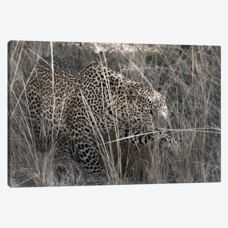 Stalking Leopard Canvas Print #SCB60} by Scott Bennion Canvas Art Print