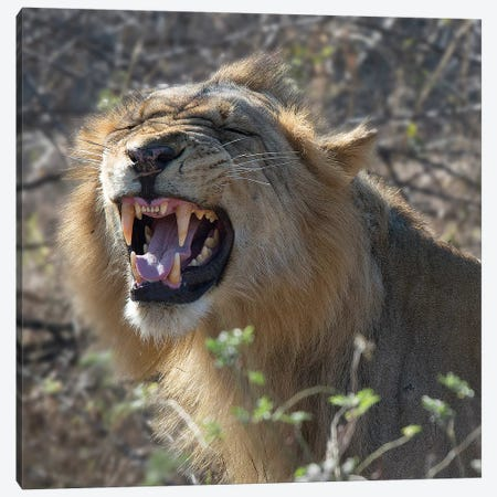Teeth Canvas Print #SCB62} by Scott Bennion Canvas Print