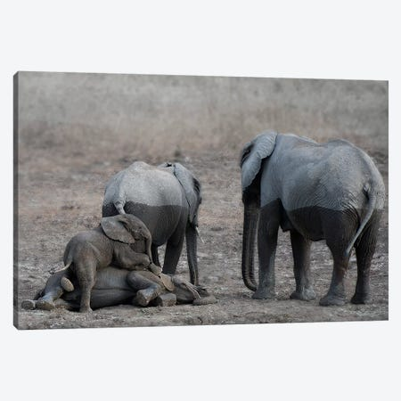 Brothers At Play Canvas Print #SCB6} by Scott Bennion Canvas Wall Art