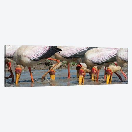 Yellow Billed Storks Fishing Canvas Print #SCB73} by Scott Bennion Canvas Art