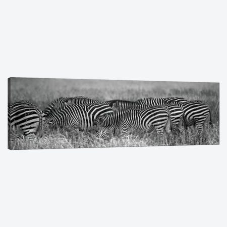 Zebra Patterns Canvas Print #SCB79} by Scott Bennion Canvas Artwork