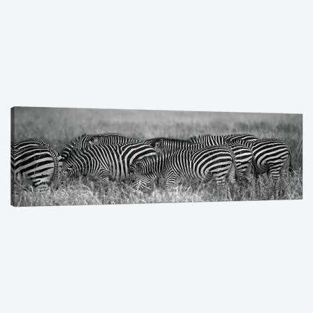 Zebra Patterns Canvas Print #SCB79} by Scott Bennion Canvas Artwork