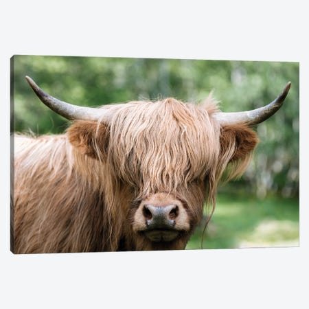 Portrait Of A Scottish Wooly Highland Cow In Norway Canvas Print #SCE135} by Michael Schauer Art Print