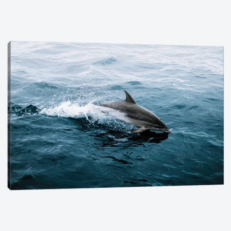 Dolphin Emerging From The Ocean Canvas Print #SCE141} by Michael Schauer Canvas Print