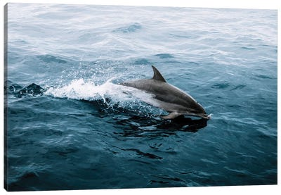 Dolphin Emerging From The Ocean Canvas Art Print