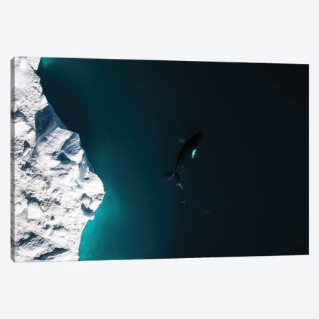 Lone Humpback Whale In Front Of A Glacier In Greenland Canvas Print #SCE156} by Michael Schauer Canvas Art Print