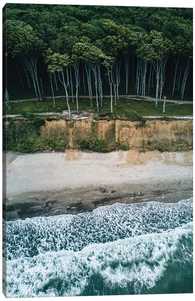 Forest On The Beach During A Stormy Day Canvas Art Print