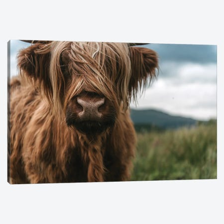 Portrait Of A Young Scottish Wooly Highland Cattle Canvas Print #SCE40} by Michael Schauer Canvas Art