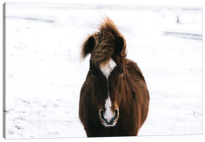 Brown Horse In The Snow In Iceland Canvas Art Print