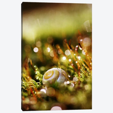 Deep Jungle II Canvas Print #SDG28} by Sebastien Del Grosso Art Print
