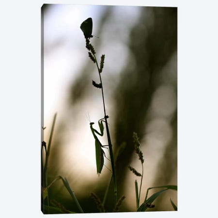 Mante Pap 3-Piece Canvas #SDG69} by Sebastien Del Grosso Canvas Print