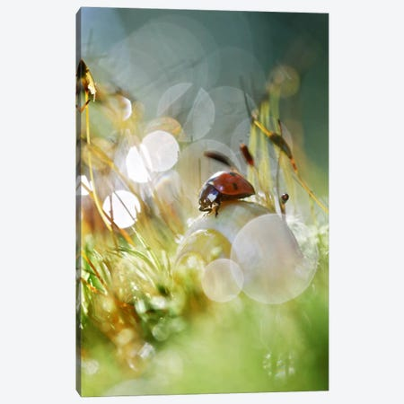 Once Upon A Time Canvas Print #SDG74} by Sebastien Del Grosso Canvas Print
