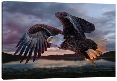 American Eagle At Plum Island Canvas Art Print