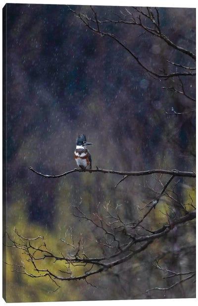 Kingfisher In The Rain Canvas Art Print