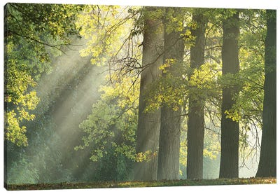 Forest Light Through The Trees Canvas Art Print