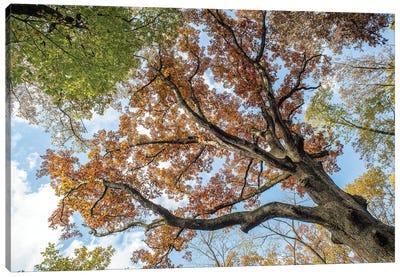 Colorlful Fall Trees Canvas Art Print